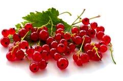 Ягоды красной смородины стоковое фото