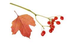 ягоды красные Стоковое Фото