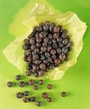 Ягоды можжевельника стоковое фото