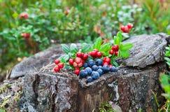 ягоды одичалые Стоковое Фото