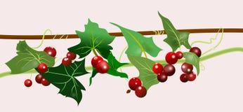 ягоды отставют белизну Стоковые Изображения RF