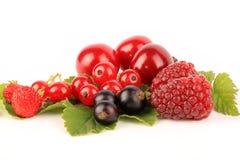 ягоды свежие Стоковые Изображения