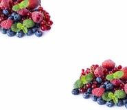 Ягоды смешивания и на белой предпосылке Зрелые голубики, поленики, красные смородины и клубники с мятой Ягоды и плодоовощи стоковое изображение