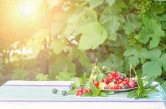Ягоды смородин вишни, черных и красных в плите с листьями мяты на таблице с скатертью стоковые изображения