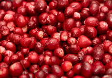 ягоды собирают красный цвет Стоковая Фотография RF