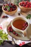 Ягоды чая розового бедра, свежих и высушенного Стоковое Фото