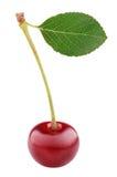 Ягода вишни при лист изолированные на белизне Стоковое Изображение
