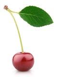 Ягода вишни при лист изолированные на белизне Стоковая Фотография RF