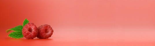 ягода знамени Стоковые Изображения RF