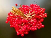 ягода, плодоовощ Стоковое Фото