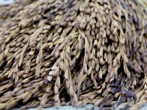 Ягода риса стоковые изображения