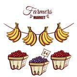 Ягоды бананов рынка фермеров Стоковые Фотографии RF