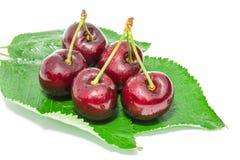 Ягоды большой зрелой темной вишни сладостные сочные с капельками воды Стоковое Изображение