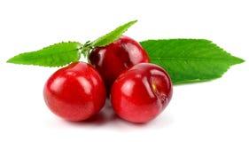 Ягоды вишни изолированные на белизне Стоковые Фото
