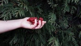 Ягоды в руке Стоковое фото RF