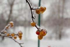 Ягоды в льде Стоковые Фото