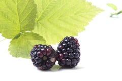 2 ягоды ежевики с листьями Стоковая Фотография