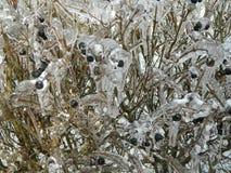ягоды заморозили Стоковые Фото