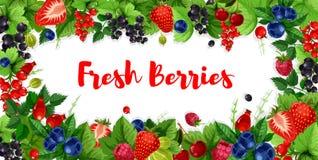 Ягоды и сладостные знамена вектора плодоовощей сада Стоковые Изображения