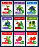 Ягоды и сладостный сад приносить карточки цены вектора Стоковые Изображения