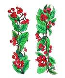 Ягоды кизильника красные в границе гирлянды Стоковые Фото