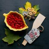 Ягоды красного цвета осени Стоковое Фото