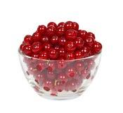 Ягоды красной смородины в чашке стекла Стоковая Фотография RF