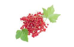 Ягоды красной смородины и листьев на светлой предпосылке Стоковое Изображение