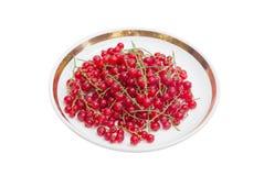Ягоды красной смородины на поддоннике Стоковая Фотография