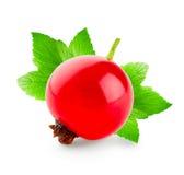 Ягоды красной смородины с 2 зелеными листьями Стоковое Изображение