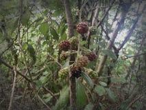 4 ягоды сезона Стоковая Фотография RF