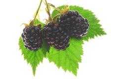 ягоды Стоковое Изображение