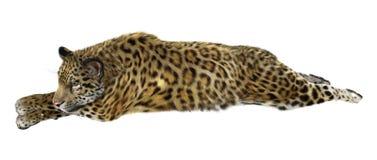 Ягуар большой кошки на белизне Стоковая Фотография