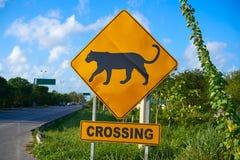 Ягуар пантеры дорожного знака пересекая Мексику Стоковое Изображение