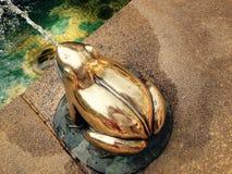 лягушка золотистая Стоковое Изображение