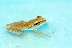лягушки Стоковое Изображение