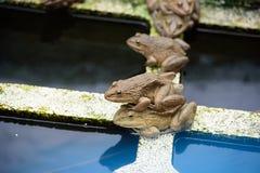 лягушки Стоковое фото RF