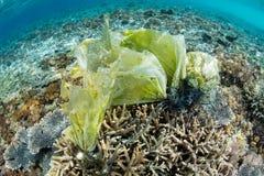 Ядовитая бородавчатка на коралловом рифе стоковое изображение rf