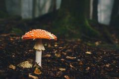 Ядовитый гриб в fairy лесе Стоковая Фотография