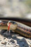 язык змейки Стоковое Изображение