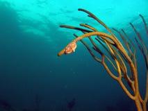 язык моря штанги фламингоа Стоковая Фотография RF