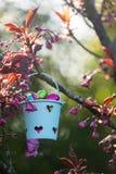яичек пасхального яйца мальчика предпосылки hunt зеленого цвета травы милых свежий спрятанный изолировал искать белизну Стоковые Изображения