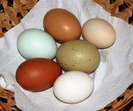 6 яичек цыпленка и утки редкой породы красочных Стоковое Фото