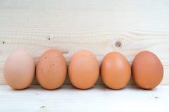 5 яичек цыпленка Стоковое Изображение RF