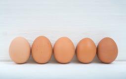 5 яичек цыпленка Стоковое Изображение
