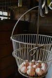 Яичка в амбаре Стоковая Фотография
