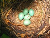 Яичка в гнезде Стоковые Изображения RF