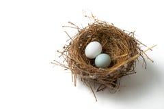 2 яичка в гнезде птицы Стоковые Фото