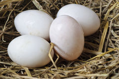 4 яичка в гнезде сена Стоковое фото RF