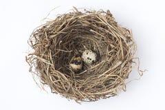 2 яичка в гнезде стоковое фото